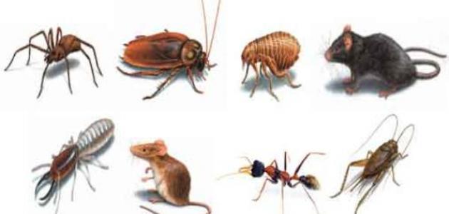 أنواع الحشرات وأسماؤها