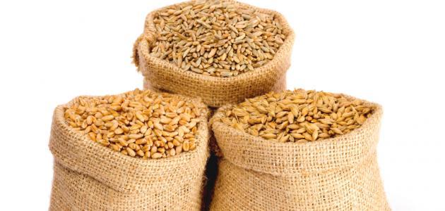 الفرق بين القمح والشعير