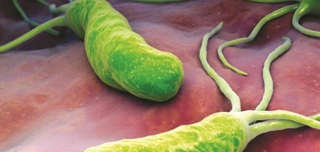 تقرير عن البكتيريا