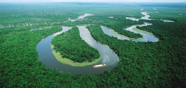 بحث حول غابة الأمازون