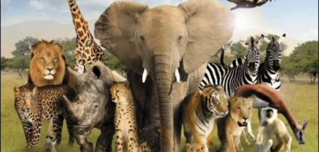 بحث عن عالم الحيوان