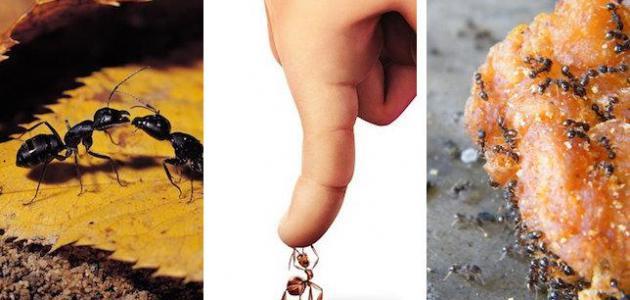 أفضل طريقة للتخلص من النمل