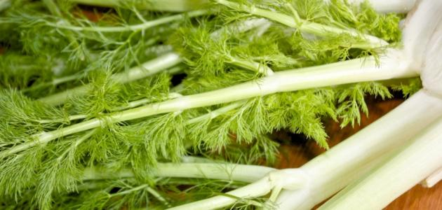 أعشاب طبيعية لزيادة الوزن