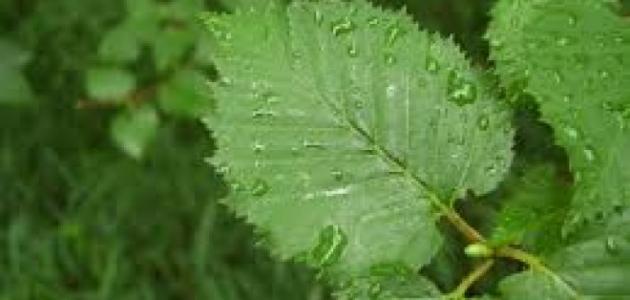 أنواع أوراق الشجر