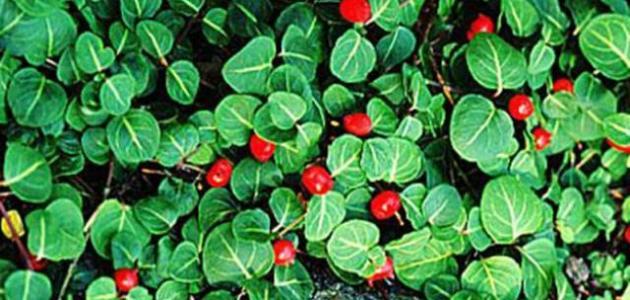 أهمية النباتات