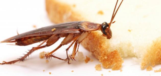 أنواع الحشرات الضارة