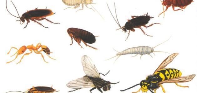 أنواع حشرات المنزل