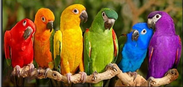 أنواع طيور الببغاء