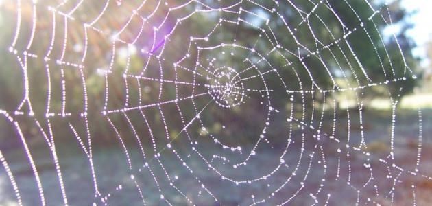التعريف بسورة العنكبوت - موضوع
