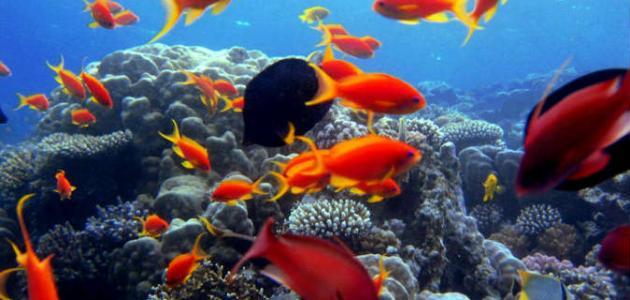 جزيرة مصرية في البحر الأحمر
