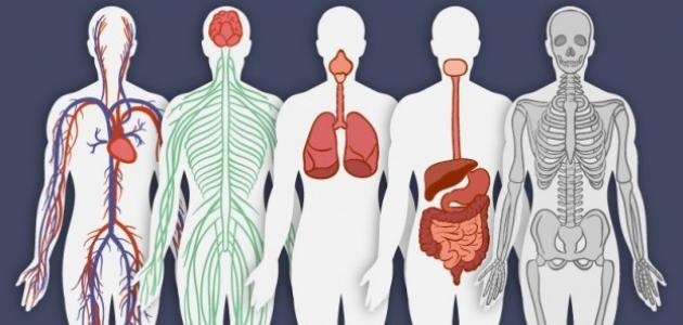 بحث عن جسم الإنسان - موضوع