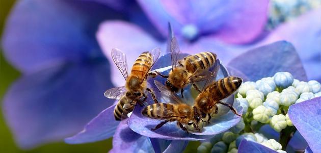 سبب تسمية سورة النحل