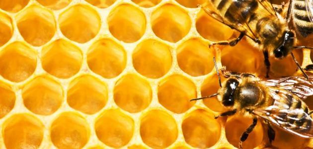 فوائد شمع العسل مع زيت الزيتون