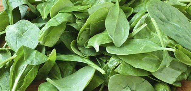 نبات السبانخ، معلومات نبات السبانخ