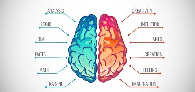 هل تستخدم الجانب الأيمن أم الأيسر من عقلك
