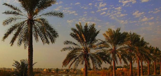 محافظة البصرة