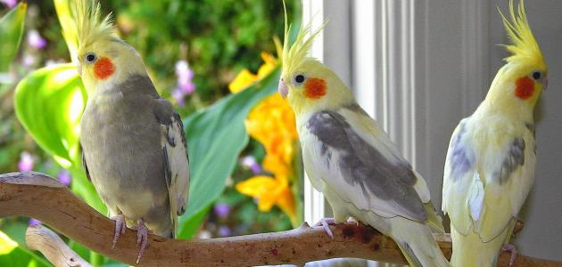 أجمل أنواع العصافير