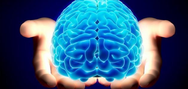 دور المخ البشري في عملية تطوير التعلم