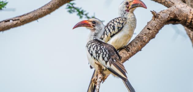 أجمل أنواع الطيور