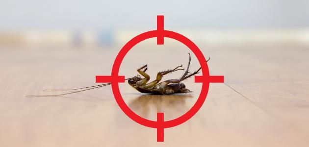 التخلص من الصراصير بطريقة طبيعية