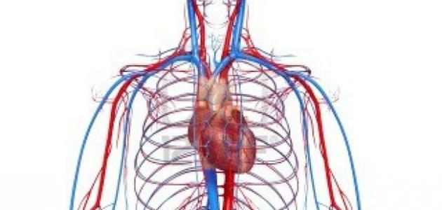 الدورة الدموية