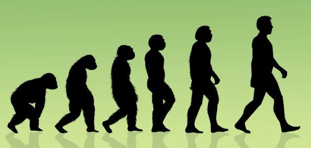 ما هو أصل الإنسان