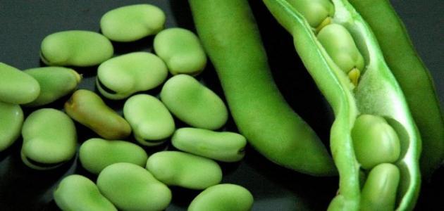 فوائد الفول الأخضر