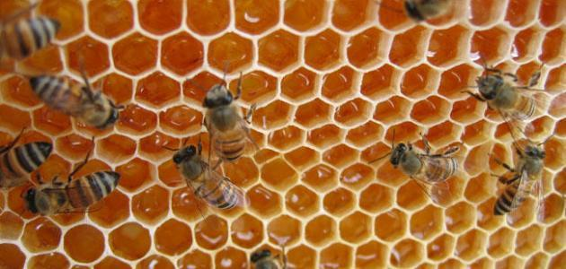 فوائد العسل الحر
