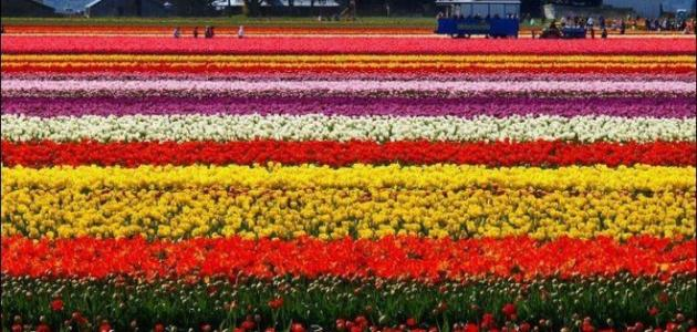 615b02fdf موضوع تعبير عن فصل الربيع - موضوع