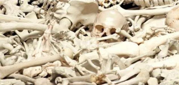 عدد عظام جسم الإنسان