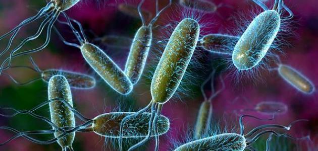 بحث عن البكتيريا والفيروسات