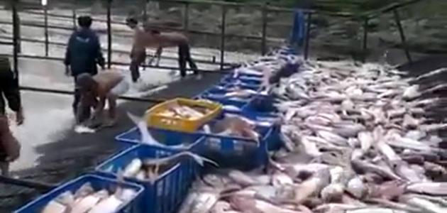 أسهل طريقة لصيد السمك