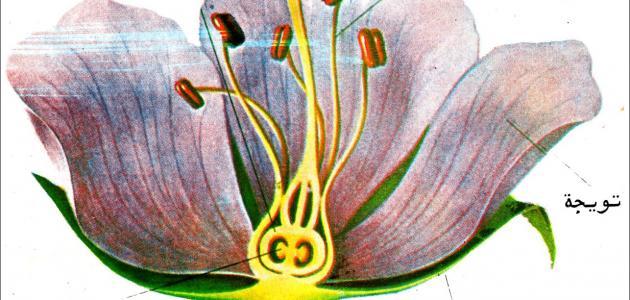 ما مكونات الزهرة