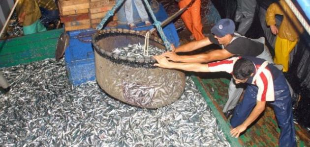 الصيد في المغرب