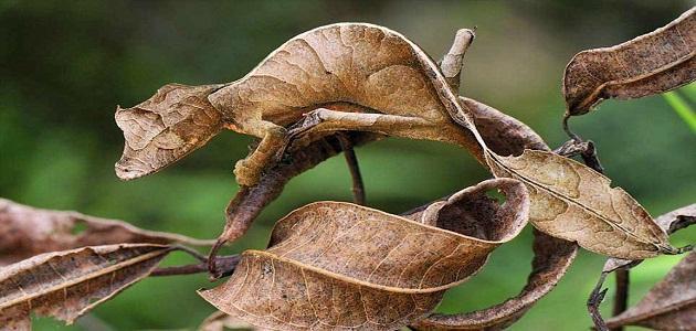 تكيف الكائنات الحية مع البيئة