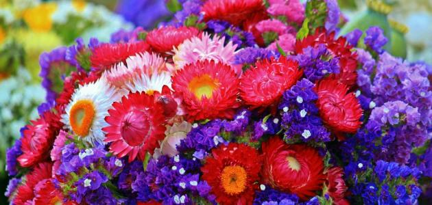 d392a1f9b موضوع عن الورد - موضوع