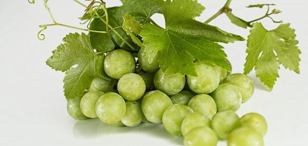 ما هي فوائد العنب