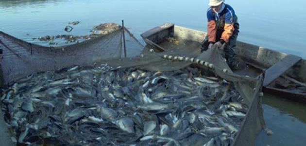 صيد السمك فى النيل