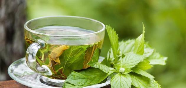 فوائد الشاي الأخضر وأضراره