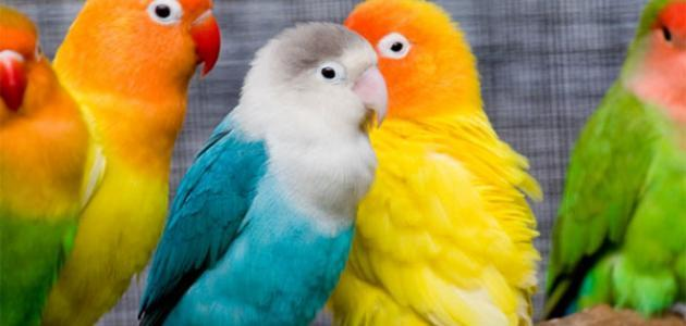 كلام عن الطيور
