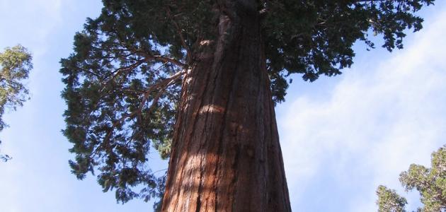 أكبر شجرة في العالم  %D8%B7%C2%A3%D8%B8%C6%92%D8%B7%C2%A8%D8%B7%C2%B1_%D8%B7%C2%B4%D8%B7%C2%AC%D8%B7%C2%B1%D8%B7%C2%A9_%D8%B8%D9%BE%D8%B8%D9%B9_%D8%B7%C2%A7%D8%B8%E2%80%9E%D8%B7%C2%B9%D8%B7%C2%A7%D8%B8%E2%80%9E%D8%B8%E2%80%A6