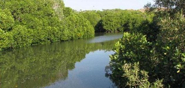 محمية جزر فرسان