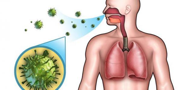 تقرير عن الجهاز التنفسي