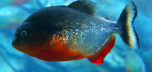 خصائص الأسماك