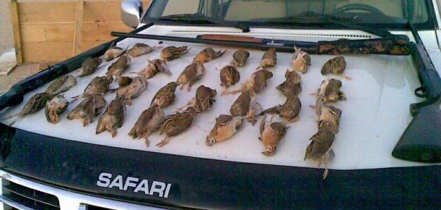 صيد الفري