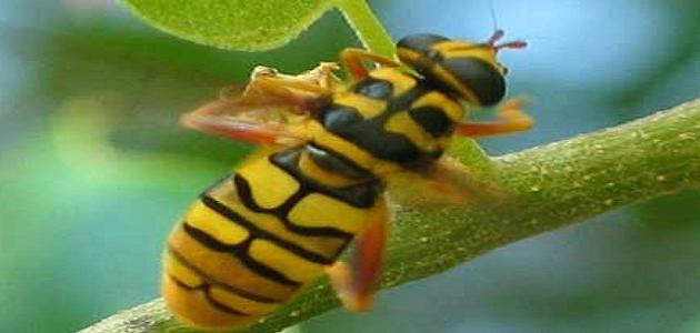تقرير عن الحشرات النافعة