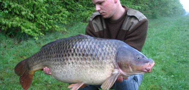 صيد سمك الكارب