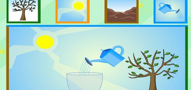 شرح مراحل نمو النبات للأطفال موضوع