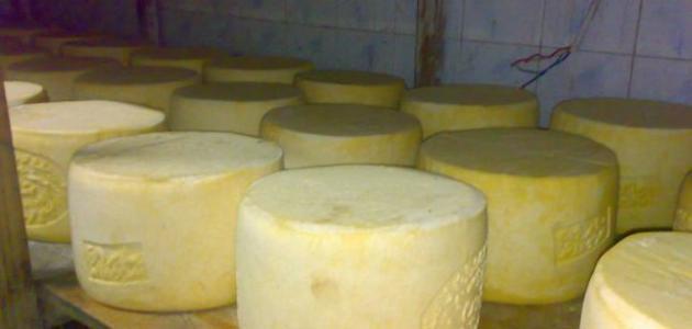 صنع الجبن في المنزل