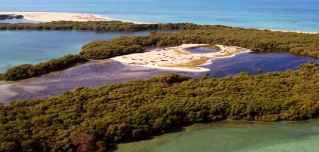 جزيرة زركوه في أبو ظبي
